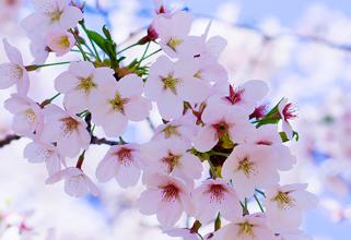 成都春天赏花好去处