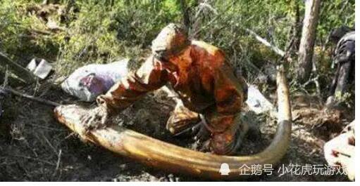 四川一地区挖出千根象牙,专家考察后:立马掩埋,赶快撤退