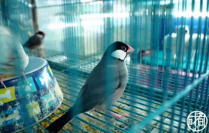 成都花鸟市场打卡攻略 那些受欢迎的成都花鸟市场
